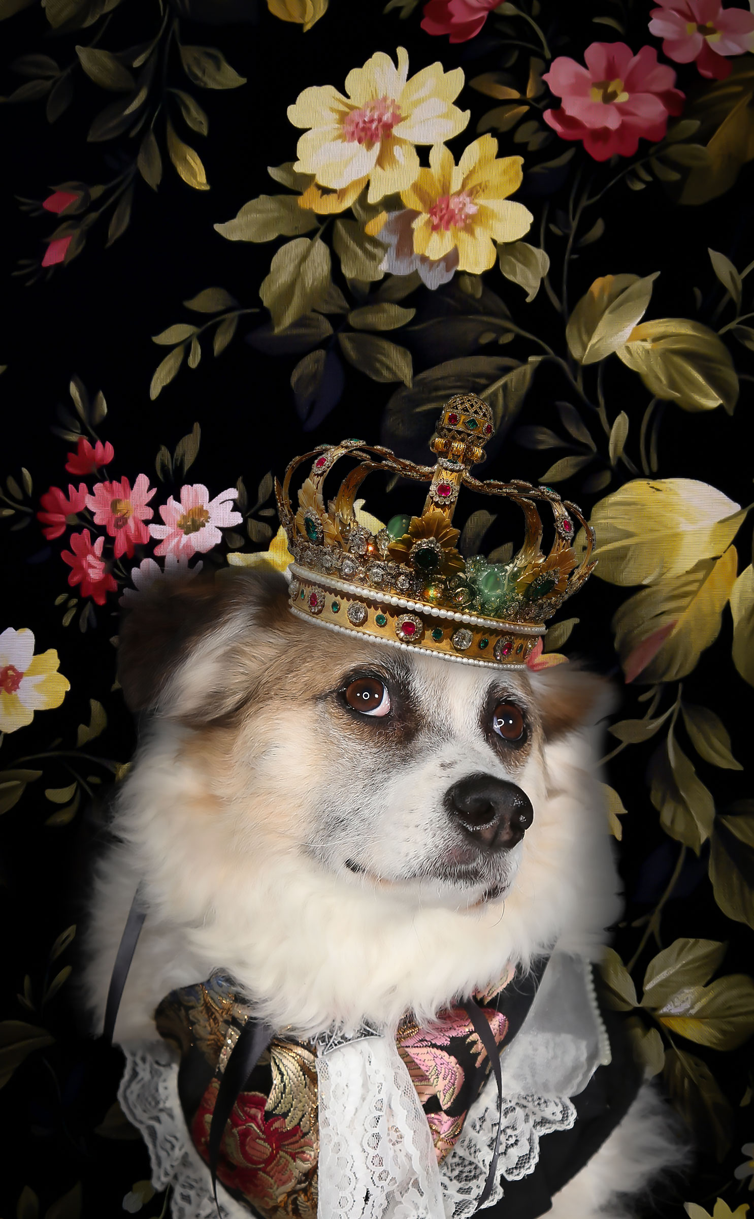 darwins dog corgi with crown
