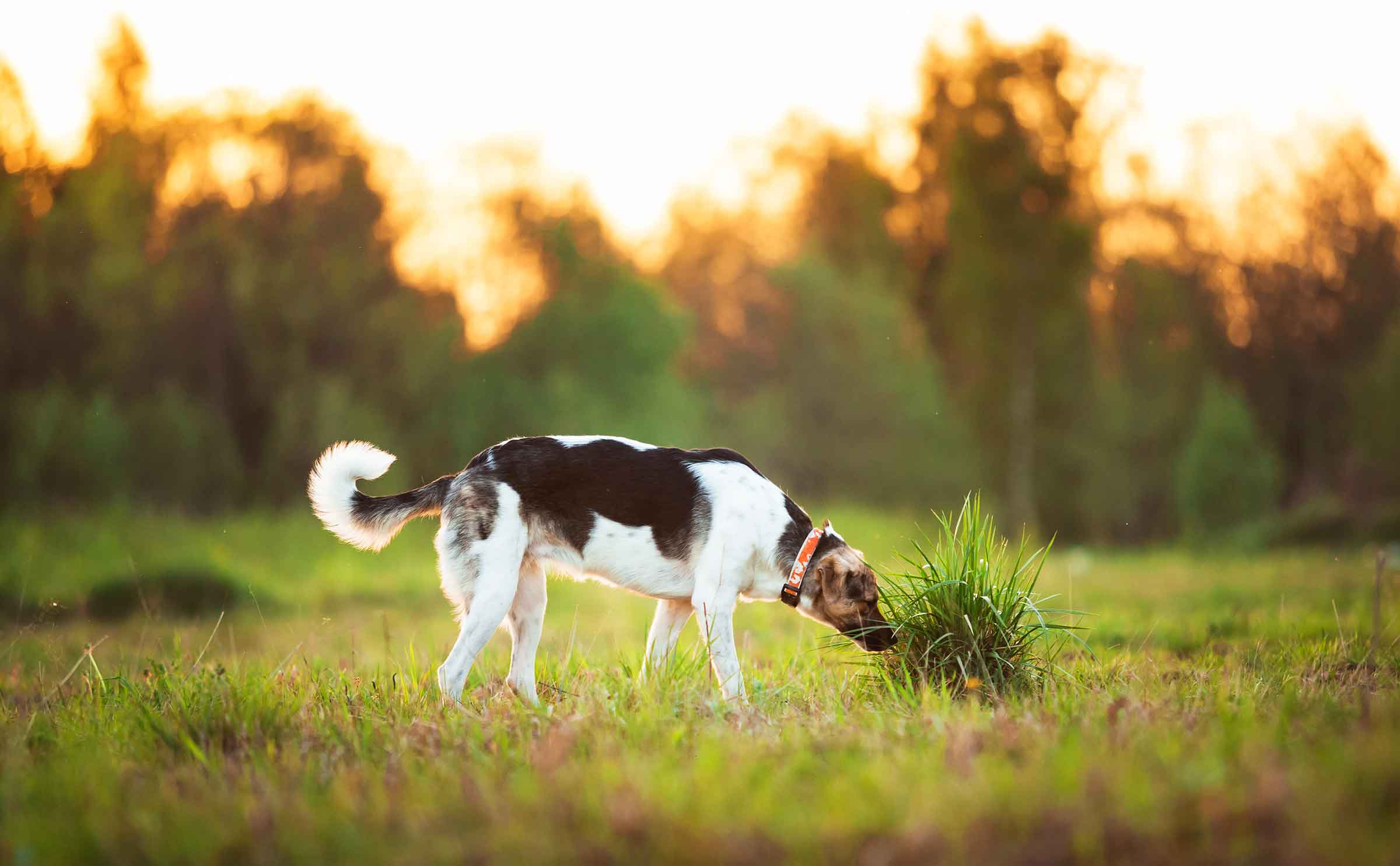 Darwin's Ranks Better than Most Dog Food Brands in Glyphosate Test
